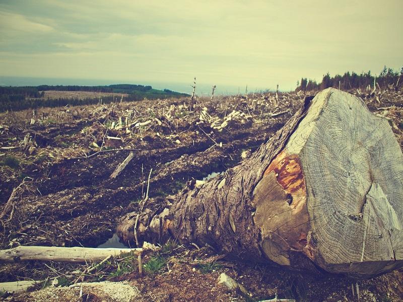 Disastro innominato e disastro ambientale