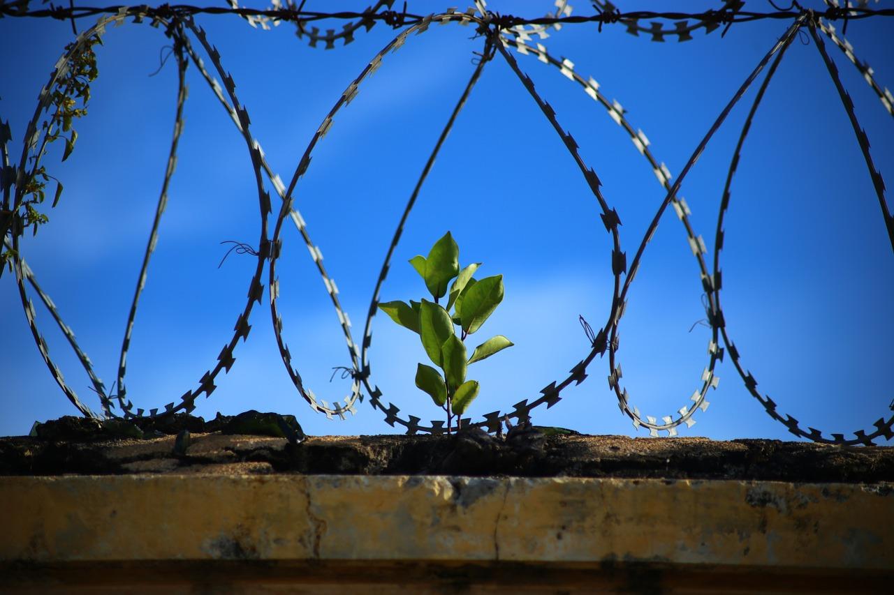 """L'ergastolo """"ostativo"""" alla redenzione del detenuto. Dalla pronuncia CEDU al nuovo orientamento della nostra Corte Costituzionale"""