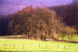 Eichengruppe Stieghagen. (Foto: Wiegand, Nov. 02, HM-XXIX-12)