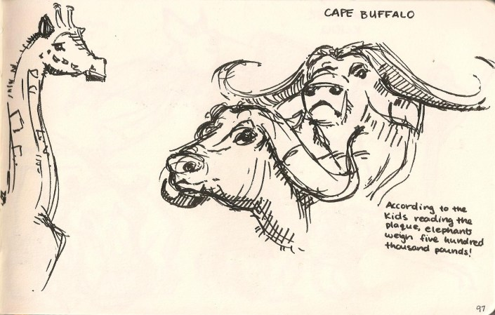 sketch of Cape Buffalo and a Giraffe from the Natural History Museum