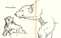 pen sketch of polar bears from Natural History Museum Los Angeles