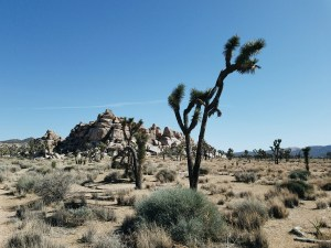 Samantha Hartman Joshua Tree National Park