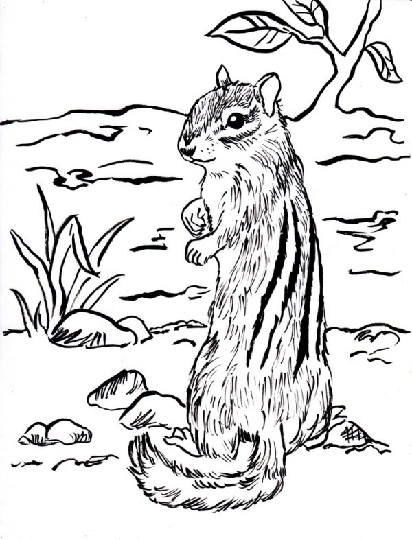 chipmunk coloring pages # 2