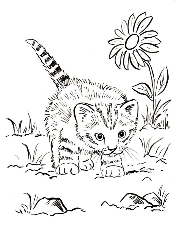 coloring pages kittens # 7