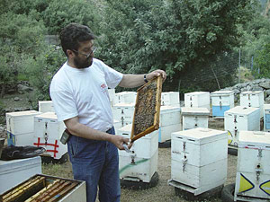 Checking the beehives - click to enlarge