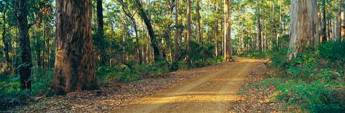 Shannon River National Park, Western Australia