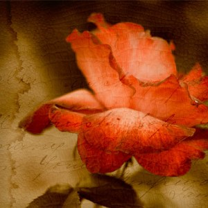 ARTography 'The Departed' Red Rose