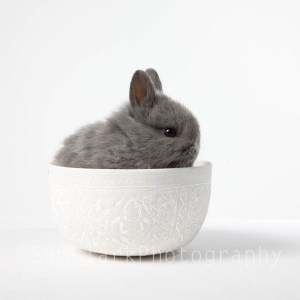 Baby Bunny in a Bowl