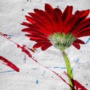 ARTography Red Graffiti Gerbera