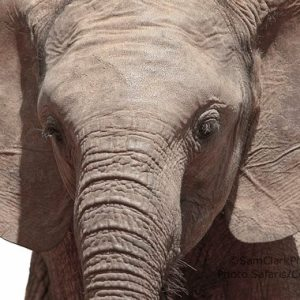 EResK 2014-01  Orphaned Elephant