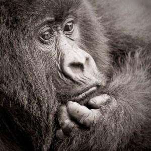 GVR 2009-04 Rwanda