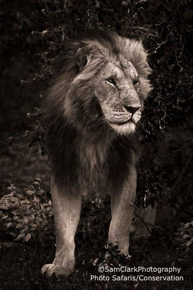 LMMK 2015-06 Kenya