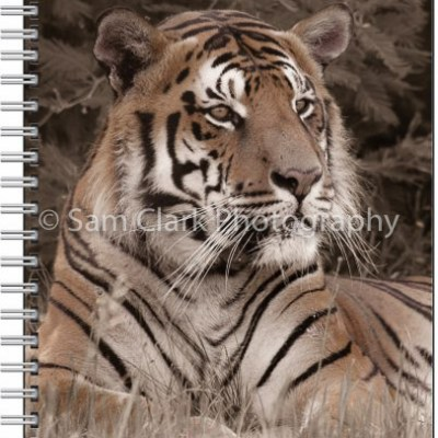 NOTE-TIGER