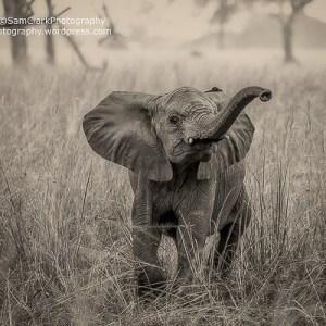 EMFU 2016- 03 Uganda