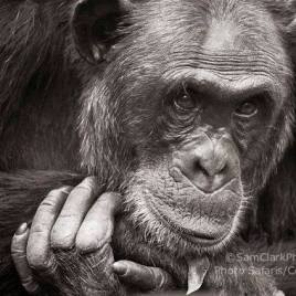 CKU 2014-01 – Finalist BBC Wildlife Photographer of the Year Competition 2015