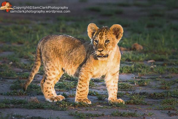 LMMK 2015-01 Kenya