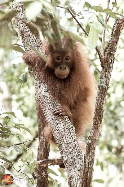 OB 2017-02 Borneo