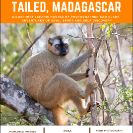 WIDE EYED AND  BUSHY TAILED, MADAGASCAR – 3rd-21st October – My Deposit