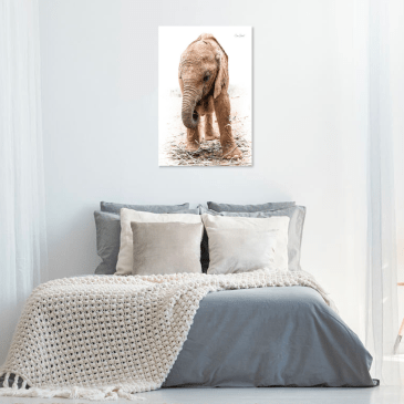 Baby Elephant in the bedroom!
