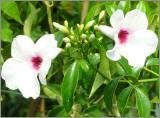 Zimmerpflanzen Samen