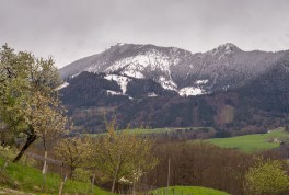 Winter und Blueten Samerberg 2