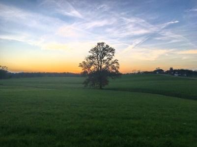kl-Abendsonne mit Eiche. 2