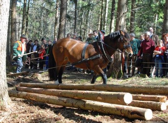 Holzrücken auf der Glentleiten
