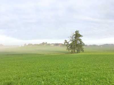 Nebel (6)