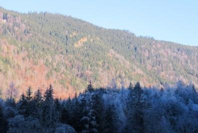 restfarbiger Bergwald, im Schatten angereift