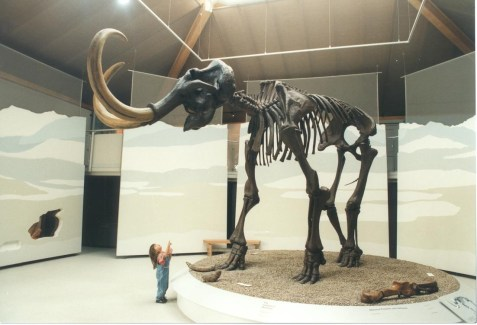 Mammutskelett mit Kind 2 MB