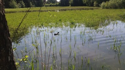 neue Jagdgründe für die Ente