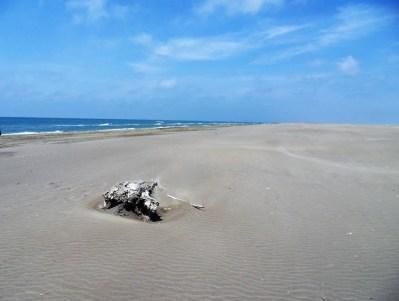 Strandidyll am Espiguette