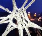 Spinnennetz (1)