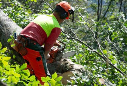Baumfällung nahe der Rechenbergalm