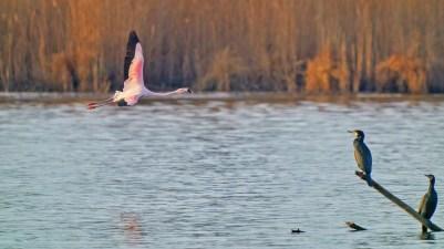 AktNatBeo-201229-ka-Chile-Flamingo-50774845158_727f22d99d_k-1500x844pix
