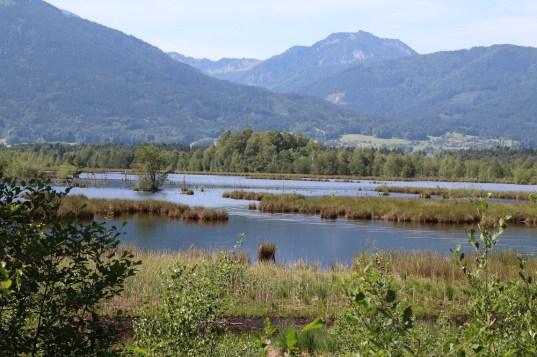 """Bilder aus dem Gebiet """"Rosenheimer Stammbeckenmoore"""". Bis 2005 wurde hier noch Torf abgebaut. Seit der Renaturierung der Fläche haben sich hier rund 150 verschiedene Vogelarten angesiedelt."""