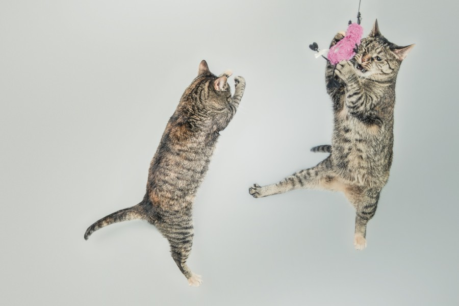 10 Hilariously Adorable Cat Videos to Brighten Your Day