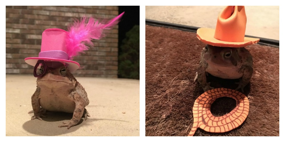 Guy Makes Tiny Hats for a Toad and OMG, Please Don't Let the Cute Stop There