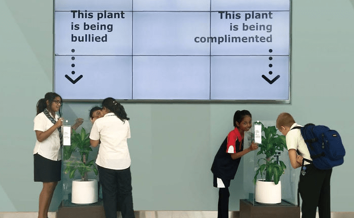 IKEA bullied plant Sammiches and Psych Meds