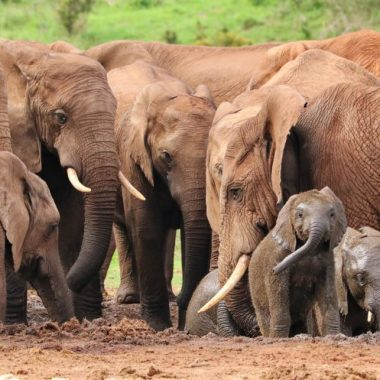When seeking a tribe, don't follow the bees. Find your elephants—a group of women who support and show empathy to one another and follow a kind, fair leader they respect.