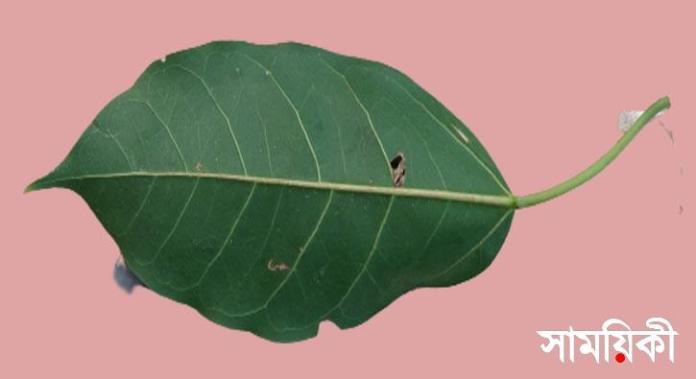 4 4 নাটোরের বারুইহাটির অচিন বৃক্ষ