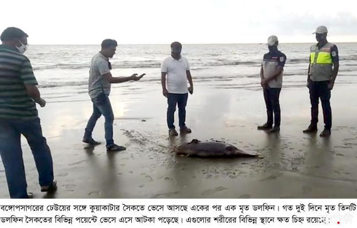 kalapara pic1 dolphin recovery 10 05 2021 সাগরের ঢেউয়ে ভেসে আসছে একাধিক মৃত ডলফিন