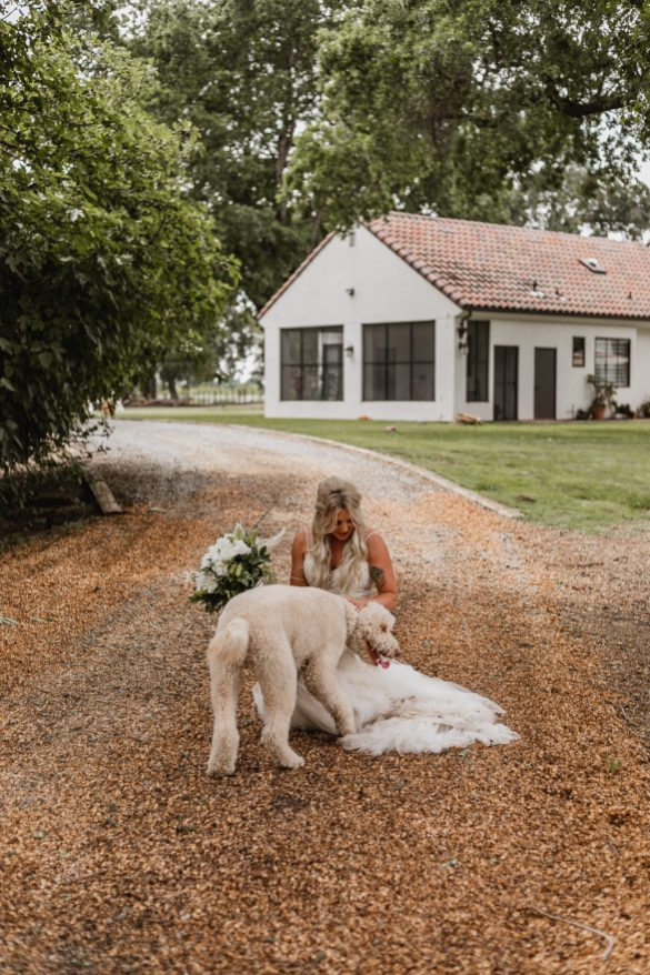 Bride with golden doodle.