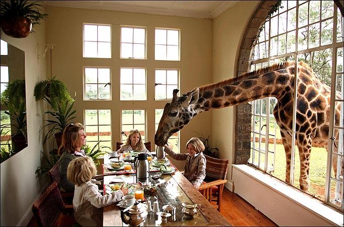 Image result for giraffe manor nairobi