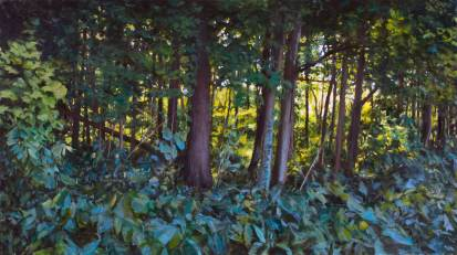Liberty Woods, 44 X 78