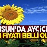 Samsun'da ayçiçeği alım fiyatı belli oldu