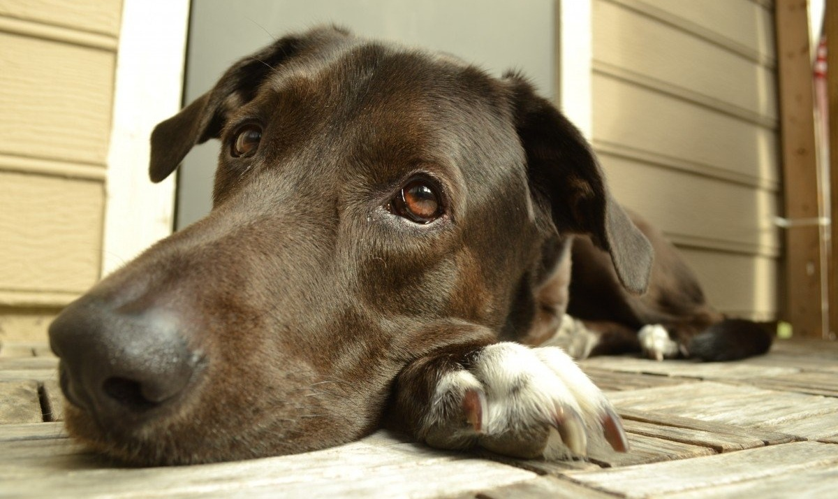 pets animal rights