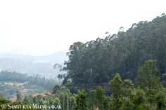 Winding roads bisect the slopes of the Nilgiri Hills, heavily forested on one side and tiny villages or sprawling tea gardens on the other