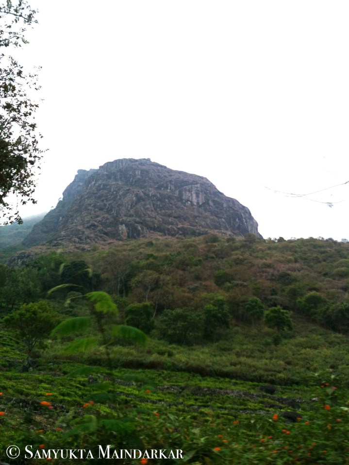 On the way down from Ooty to Mysore via the Gudalur-Bandipur route
