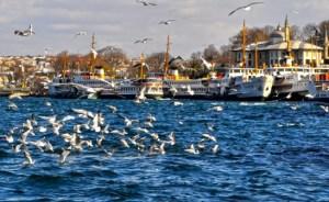 İstanbul'da deniz ve martılar...